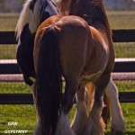 STALLIONS11 10_grwmvpnov10090_3408