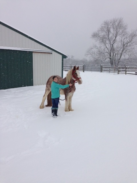little girl gets gypsy vanner horse for christmas
